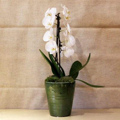 green-pot-white-orchid-blind