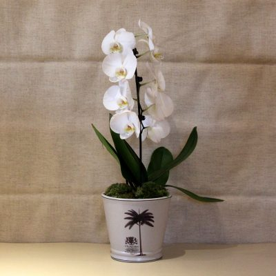 palm-tree-white-orchid-blind